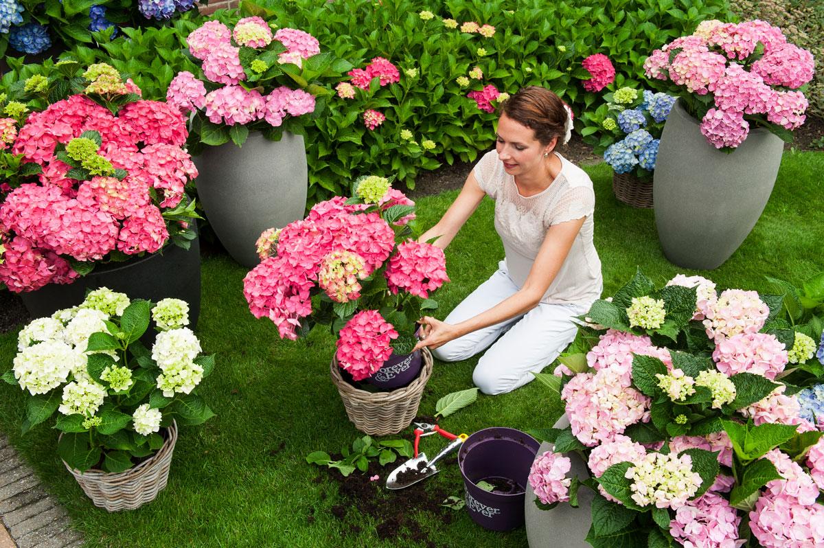 Vrtnarski nasveti