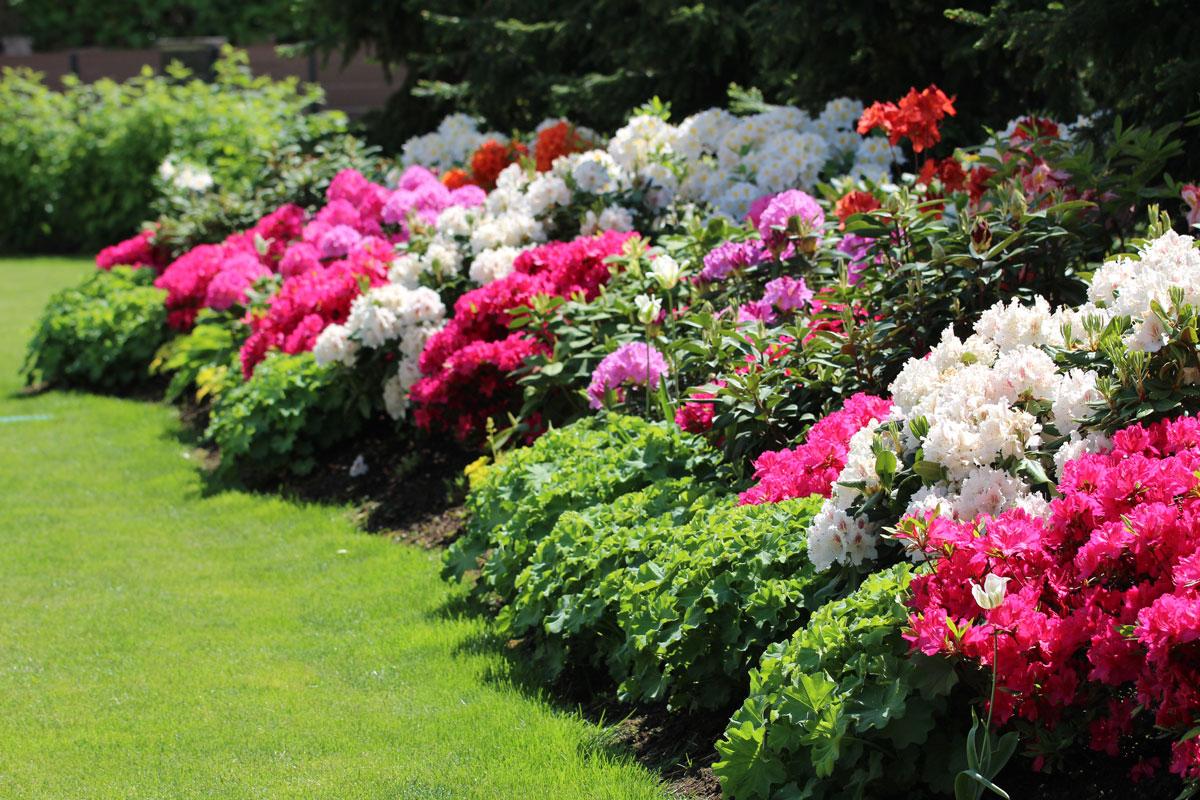 Vrt z rododendroni in azalejami