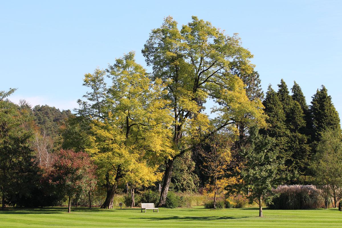 Park - oktober