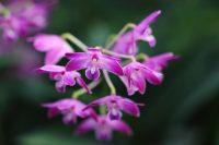 Razstava orhidej v Arboretumu