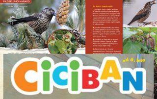 Revija Ciciban in Arboretum