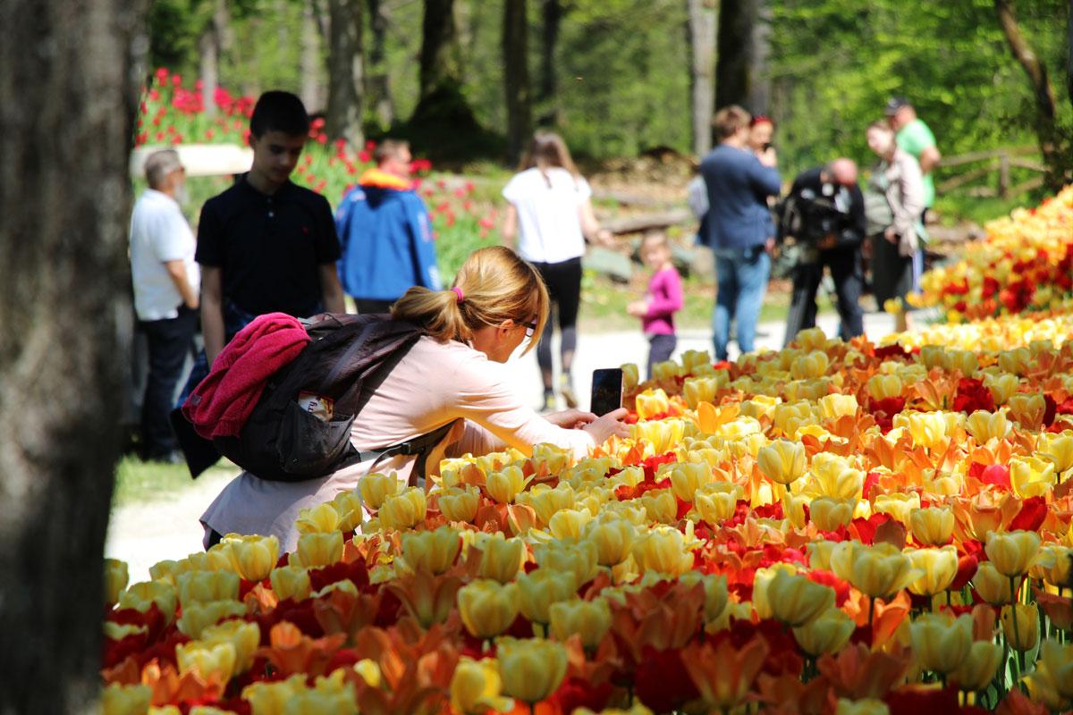 Spomladanska razstava v Arboretumu Volčji Potok