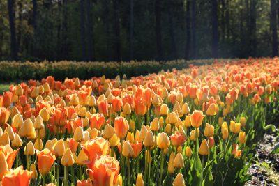 Pomlad v Arboretumu Volčji Potok