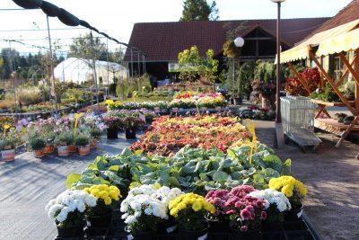 Jesenska ponudba v vrtnem centru