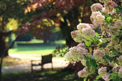Pogled na hortenzije