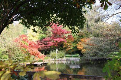 Jesen v Arboretumu Volčji Potok