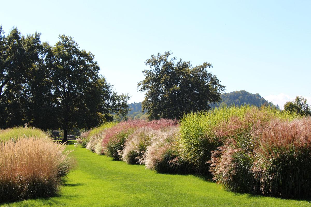 Mesec trav v Arboretumu Volčji Potok