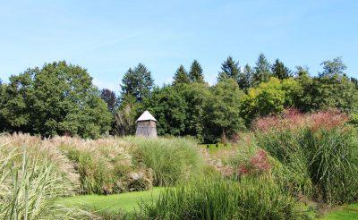 Okrasne trave v Arboretumu