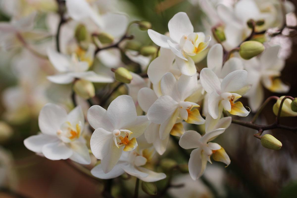 Razstava orhidej v Arboretumu Volčji Potok