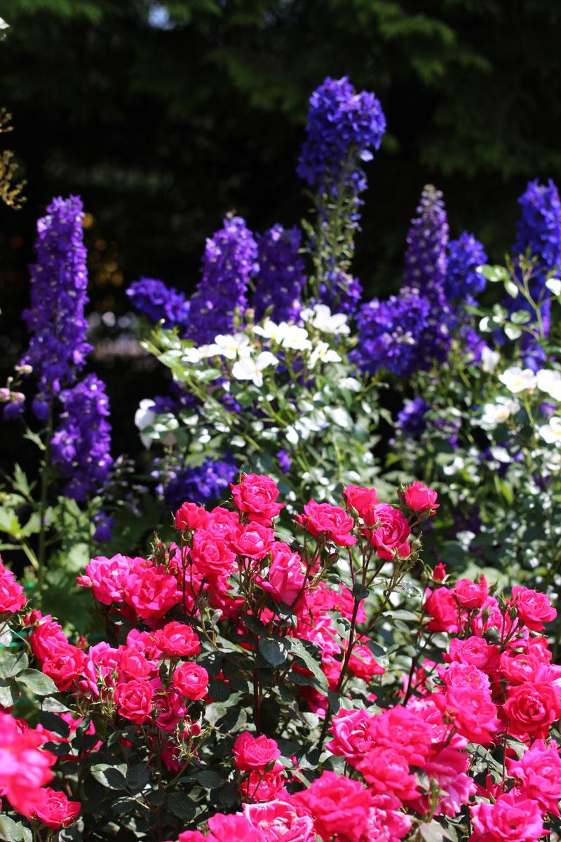 Vrtnice in trajnice