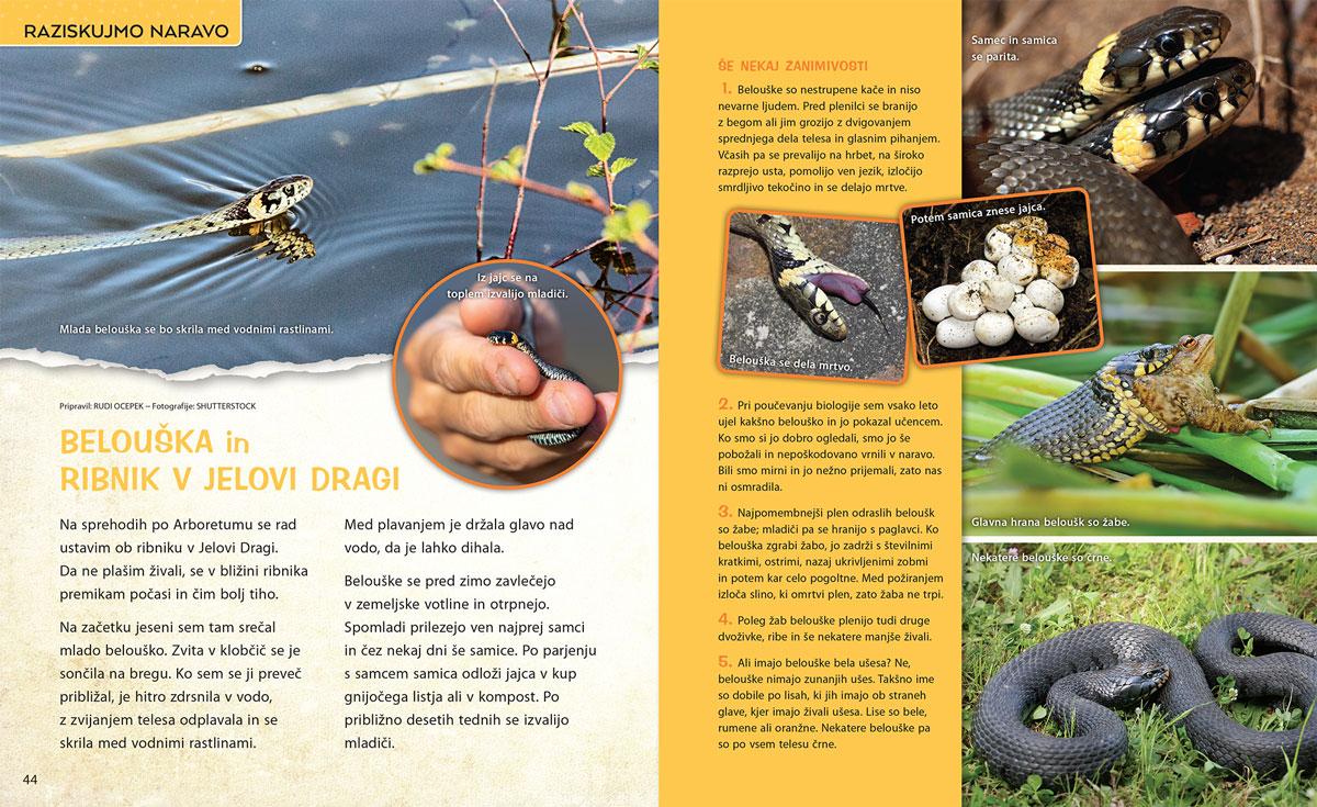 Belouška in ribnik v Jelovi dragi - članek v reviji Ciciban