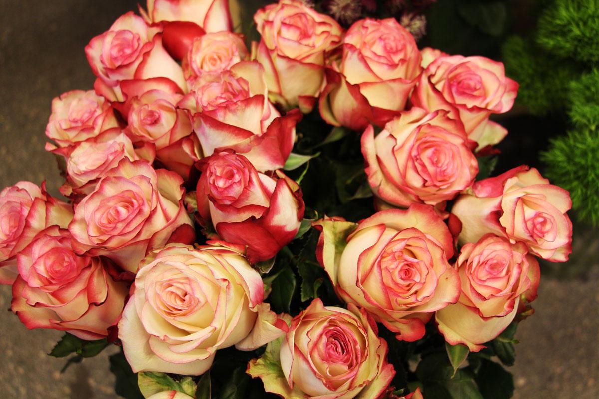 Rezano cvetje