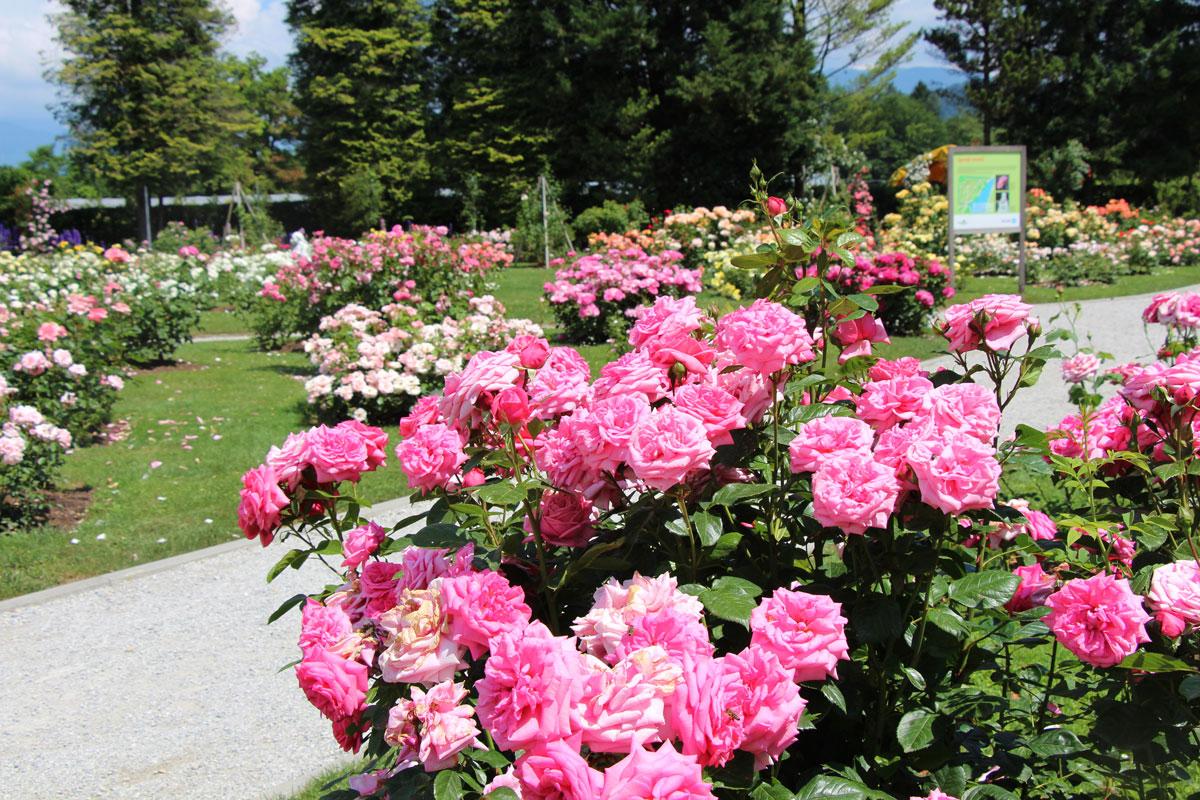 Zgornji rozarij Arboretuma Volčji Potok