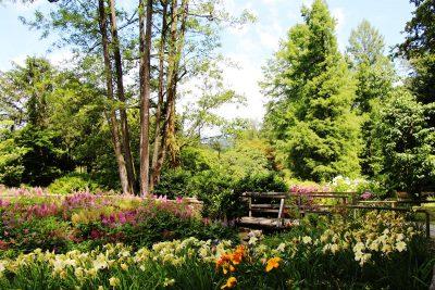 Poletje v Arboretumu Volčji Potok
