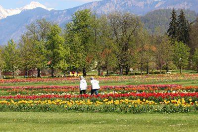 Spomladanska razstava tulipanov