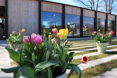 Tulipani pred vhodom v park