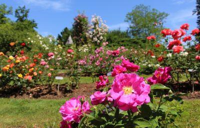 Mesec vrtnic v Arboretumu Volčji Potok