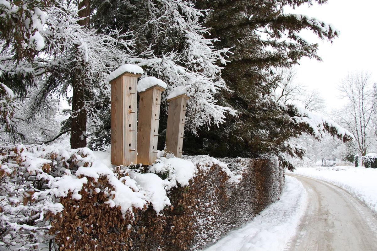 Arboretum pozimi