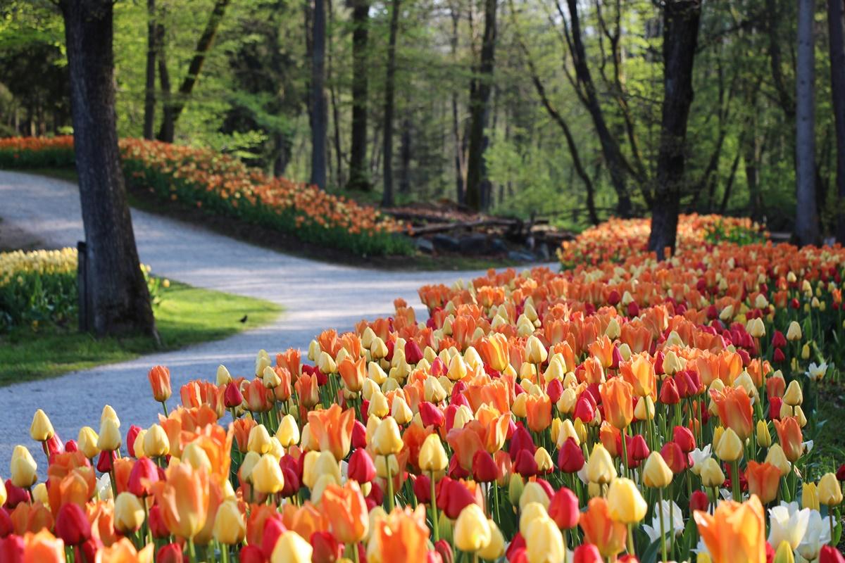 Arboretum Volcji Potok Hr Arboretum