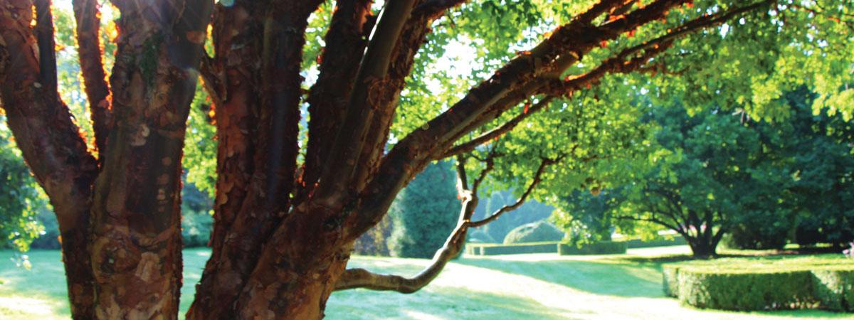 Arboretum je zbirka dreves in grmovnic