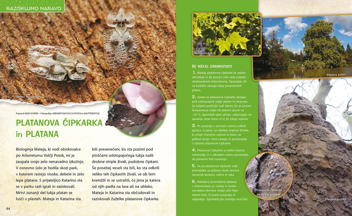Platanova čipkarka in platana - članek v reviji Ciciban