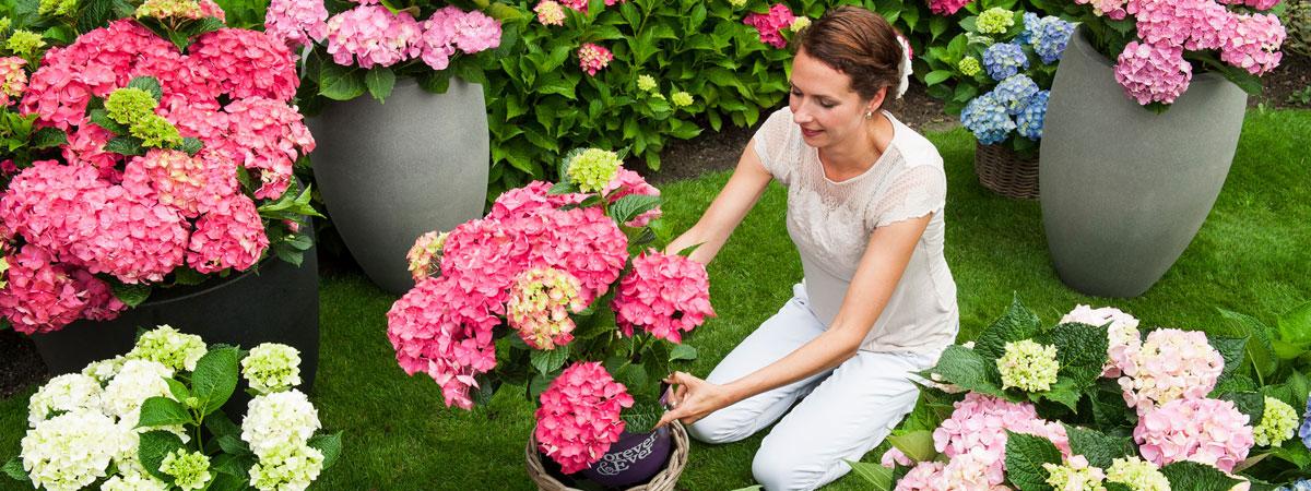 Nasveti za vrt