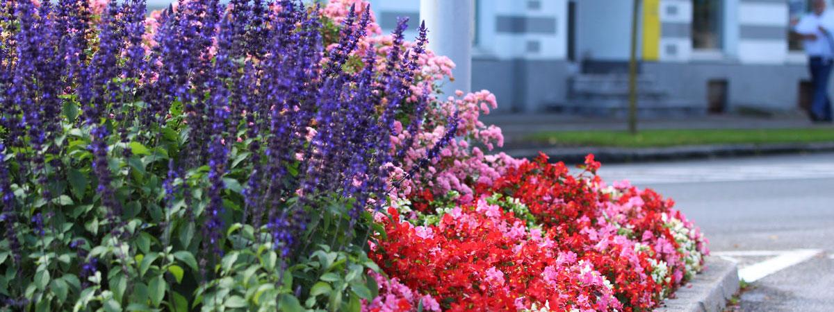 Projektiva Arboretuma najde rešitev za vaš vrt