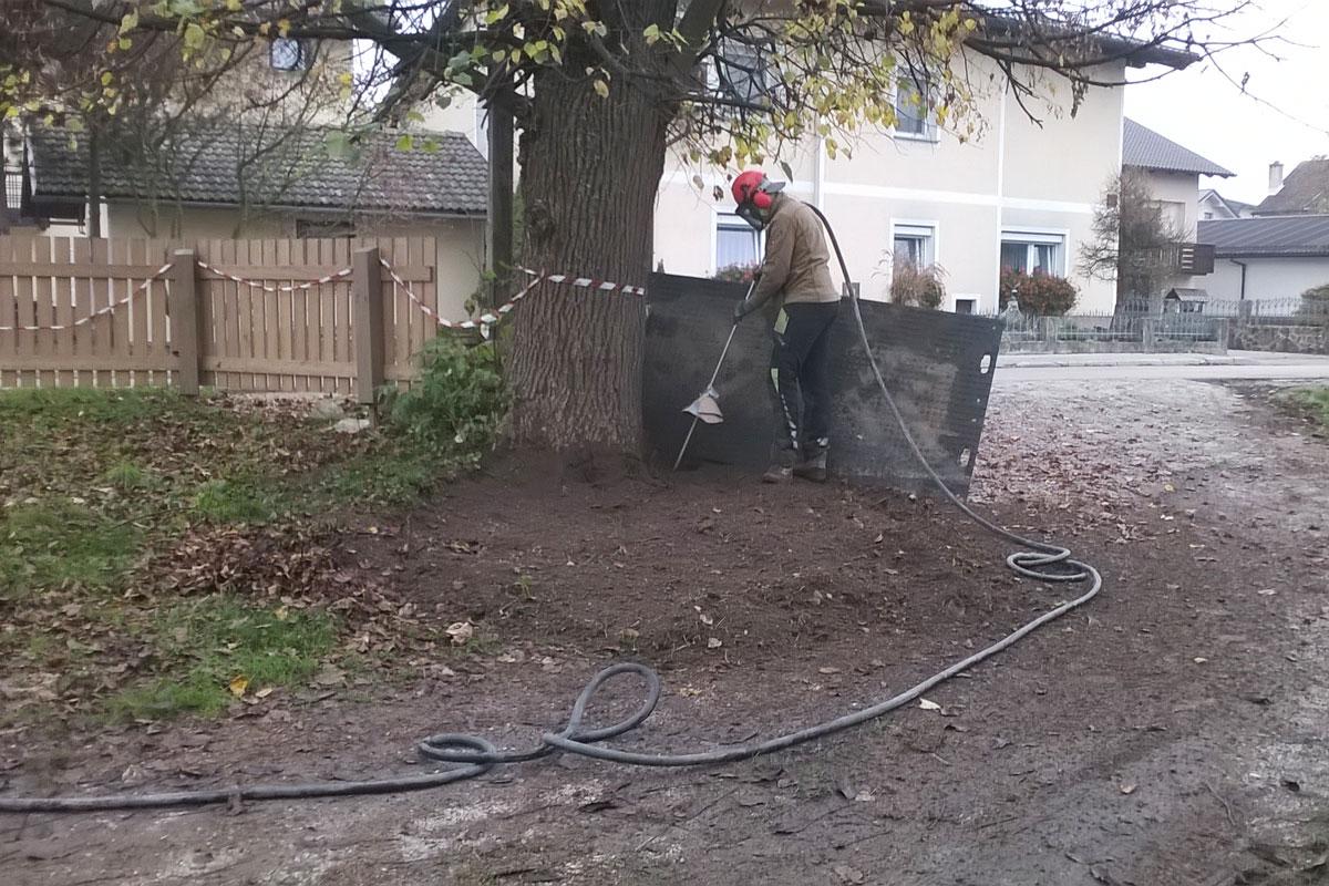 Spihovanje korenin