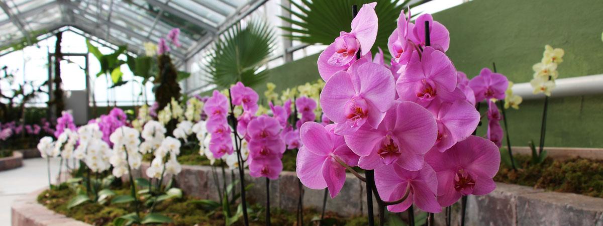 Kakteen und Orchideen