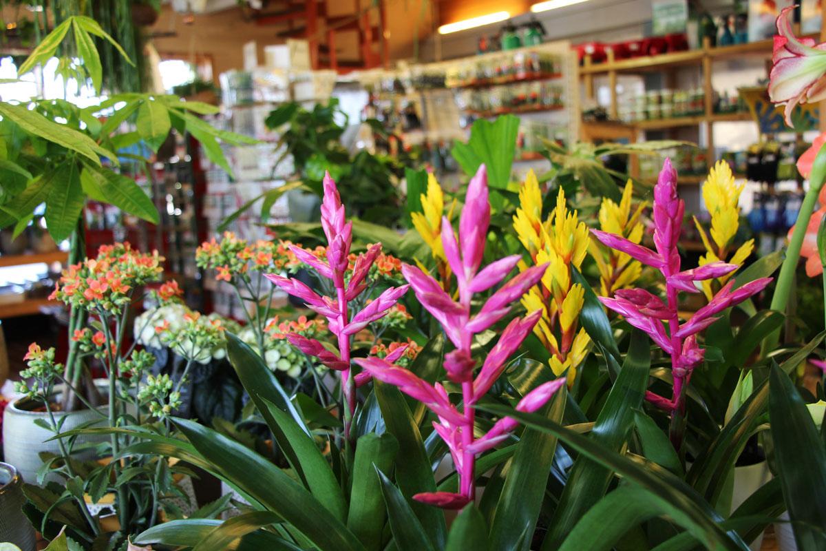 Cvetoče sobne rastline