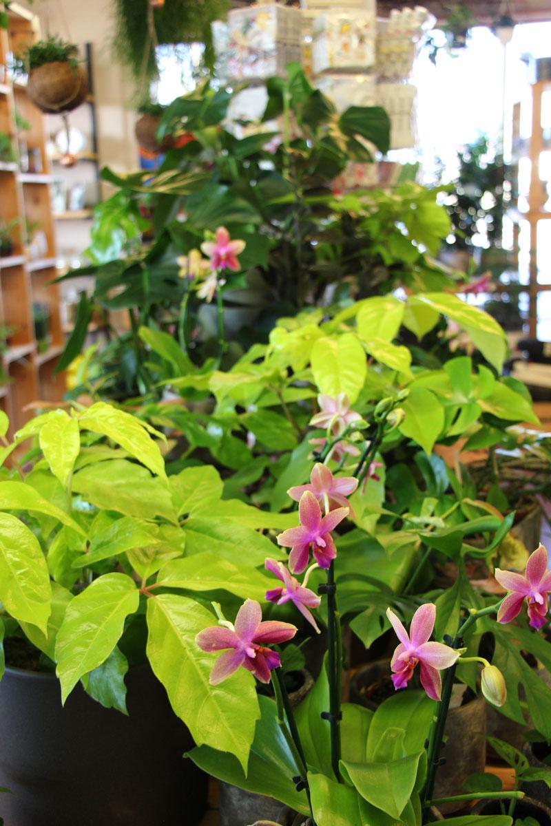 Zelene in cvetoče sobne rastline
