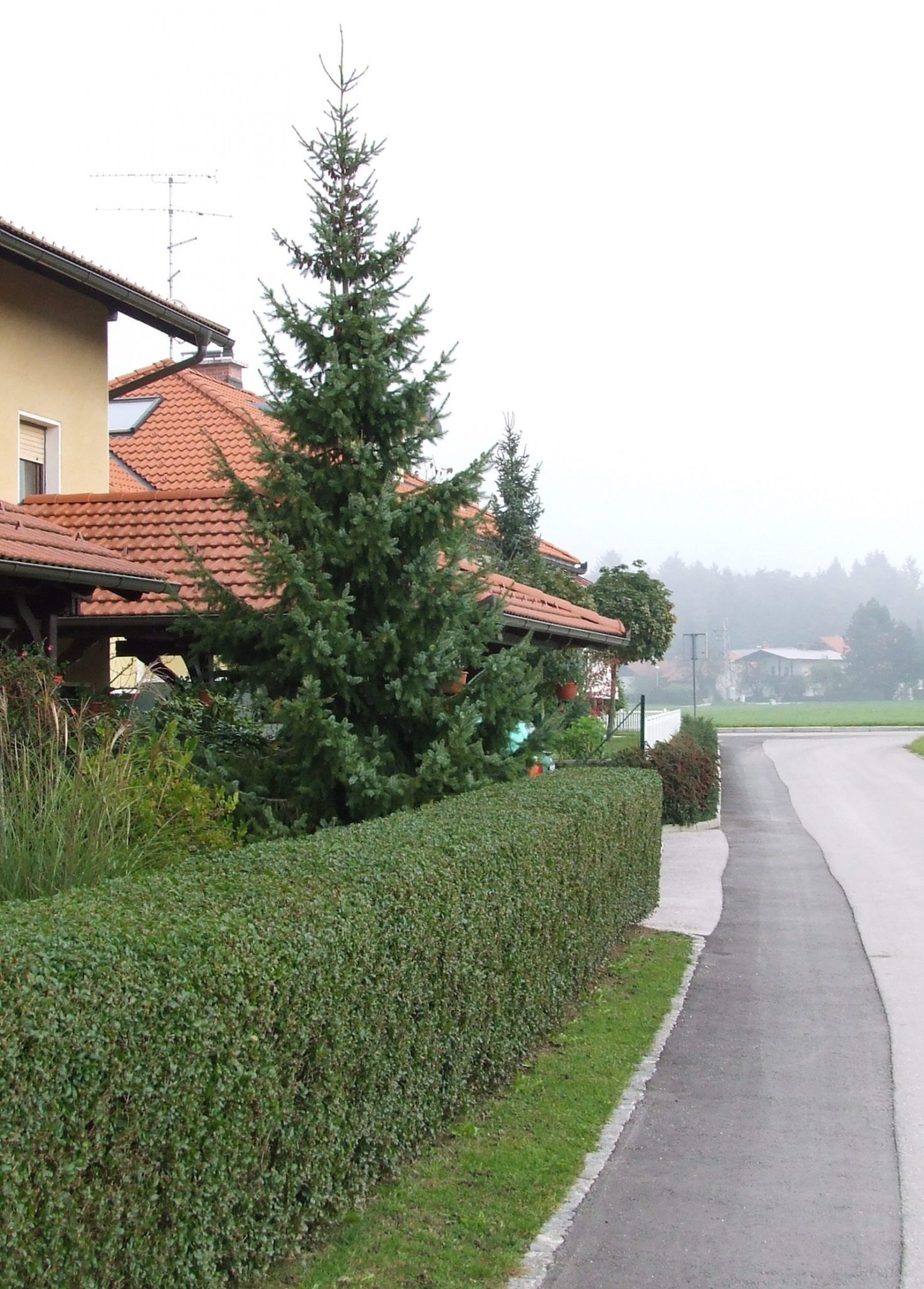 Rez, strižanje in pomlajevanje grmovnic