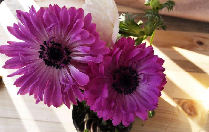Cvetoči uvod v zimske počitnice po polovični ceni