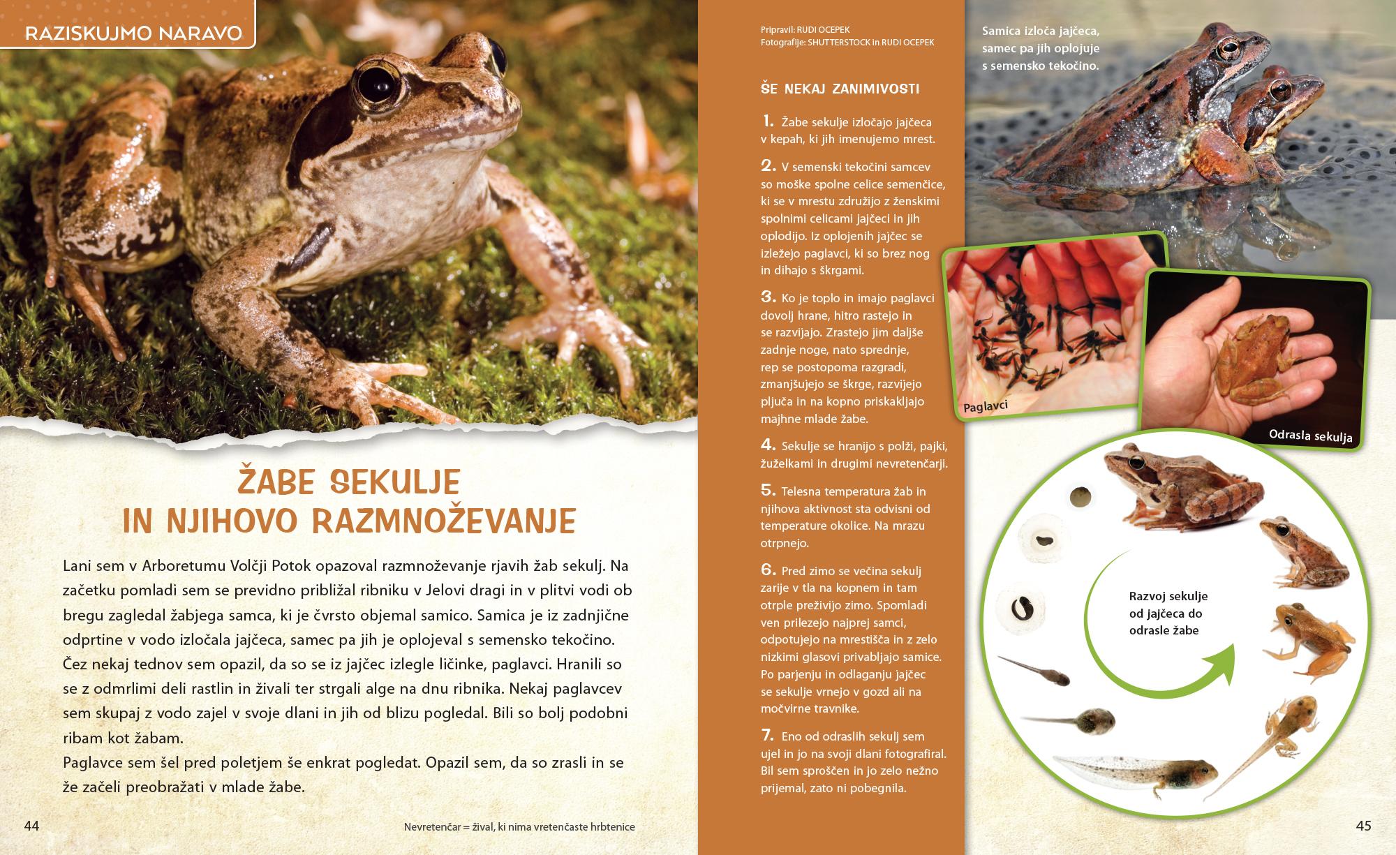 Žabe sekulje - članek v reviji Ciciban