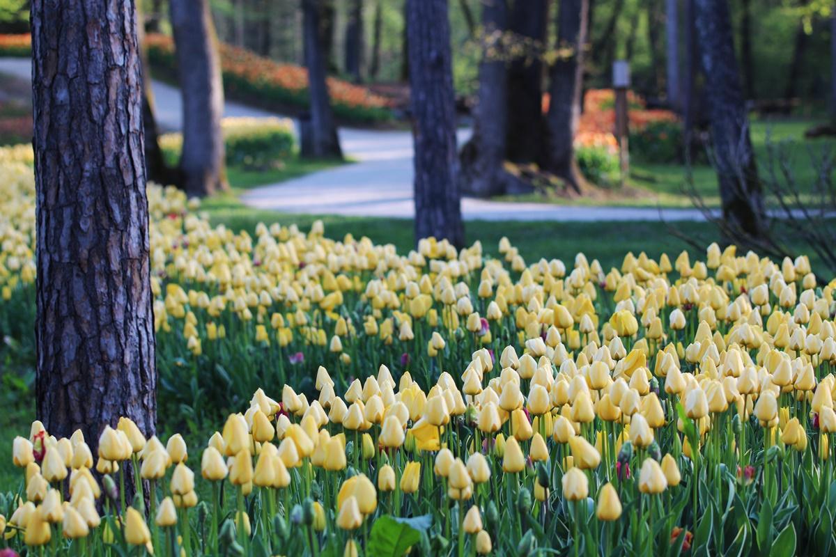 Spomladanska razstava cvetja, vrtne opreme, vrtnarski sejem in sejem domače obrti