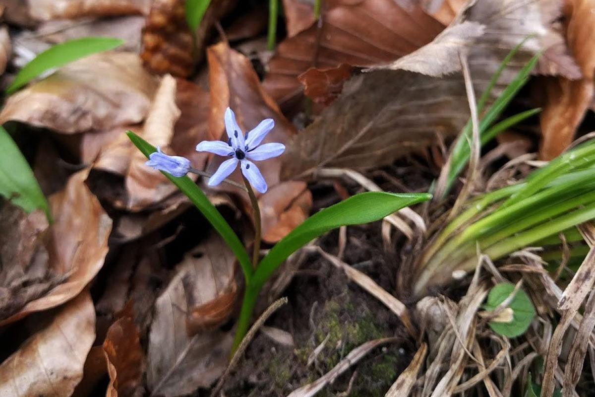 Manj znane znanilke pomladi