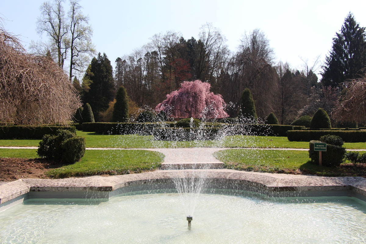 Japonska češnja v francoskem vrtu