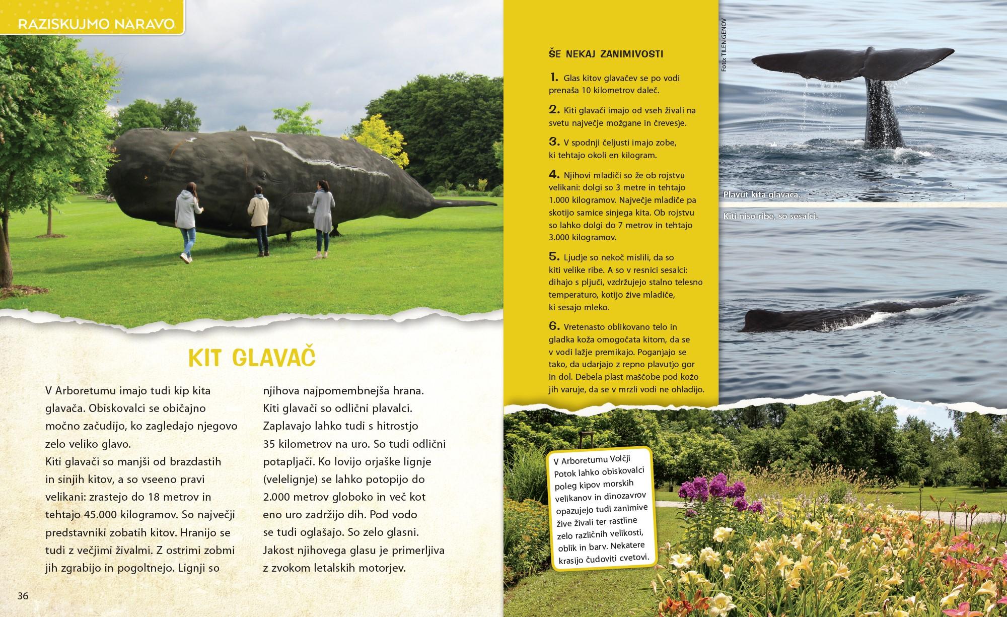 Kit glavač - članek v reviji Ciciban