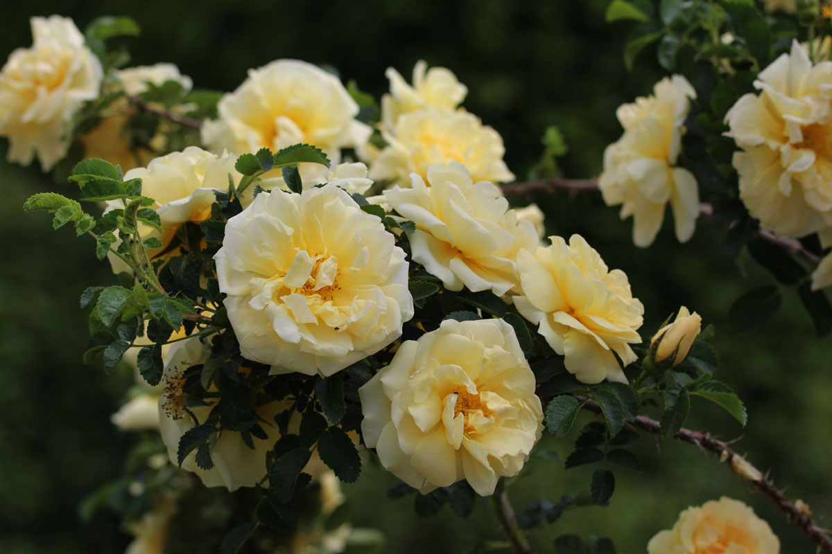 Pregled sort vrtnic po gredah