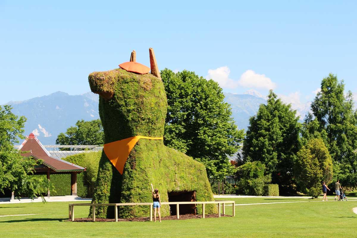 Največji cvetlični kuža v Sloveniji