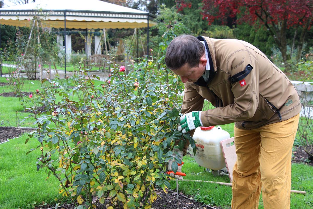 Vzimovanje vrtnic