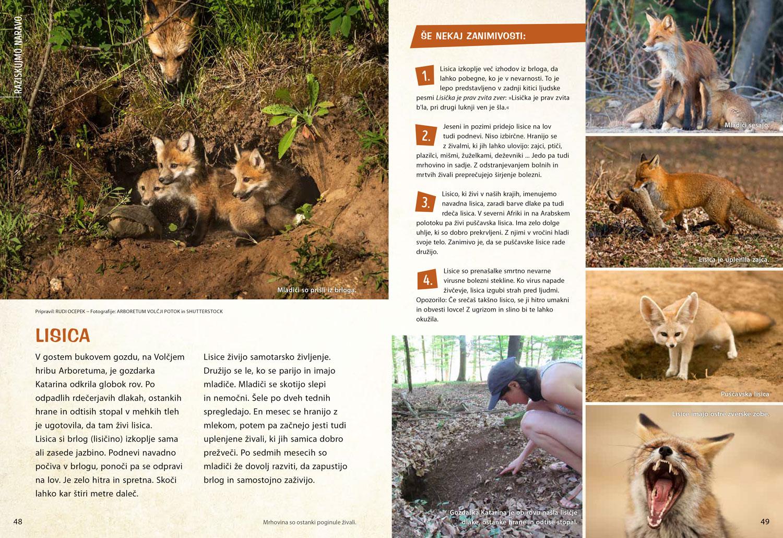 Lisica - članek v reviji Ciciban