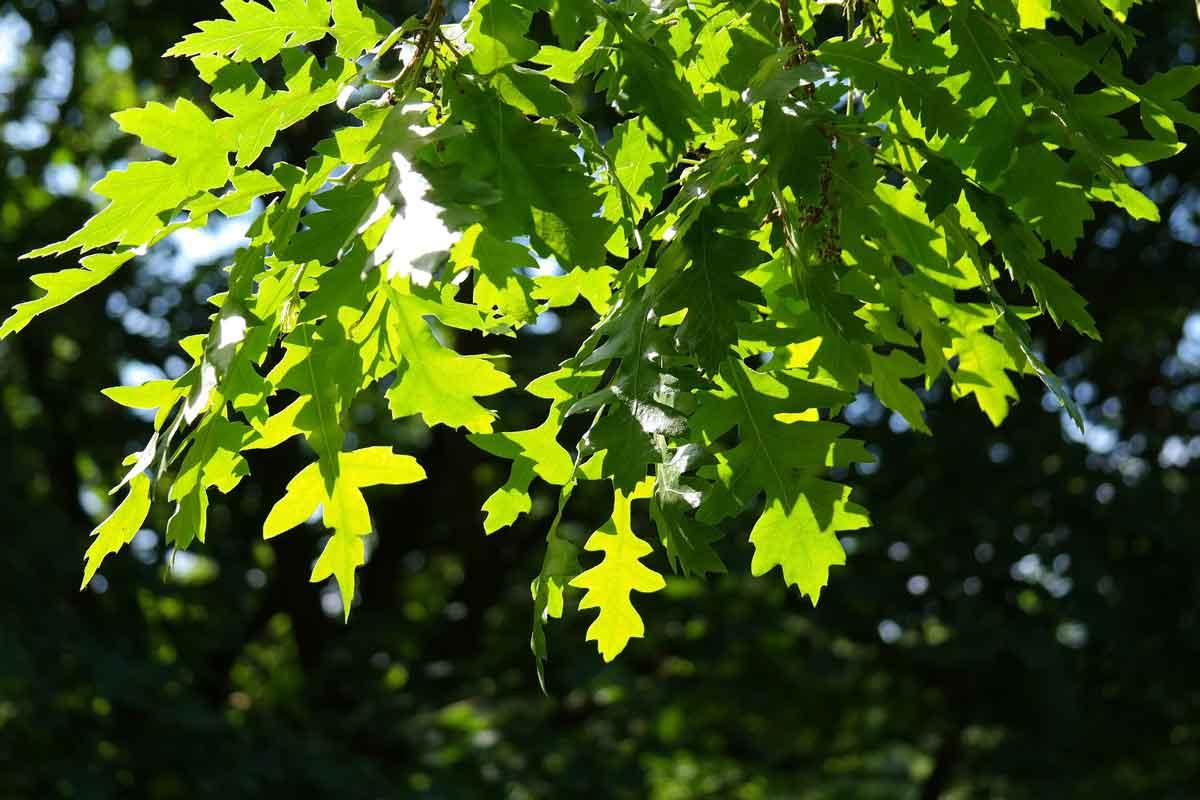 Drevesa za spremenjeno podnebje