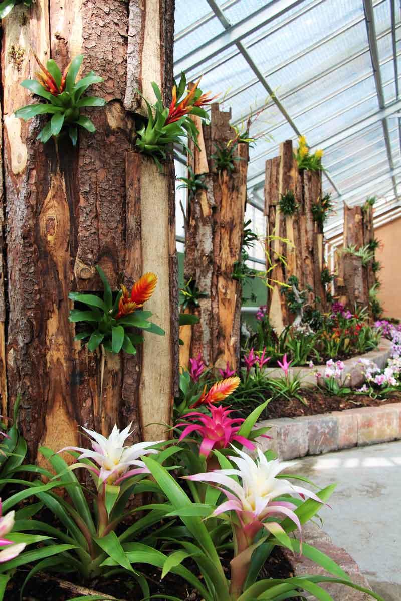 Razstava cvetočih ananasovk in orhidej