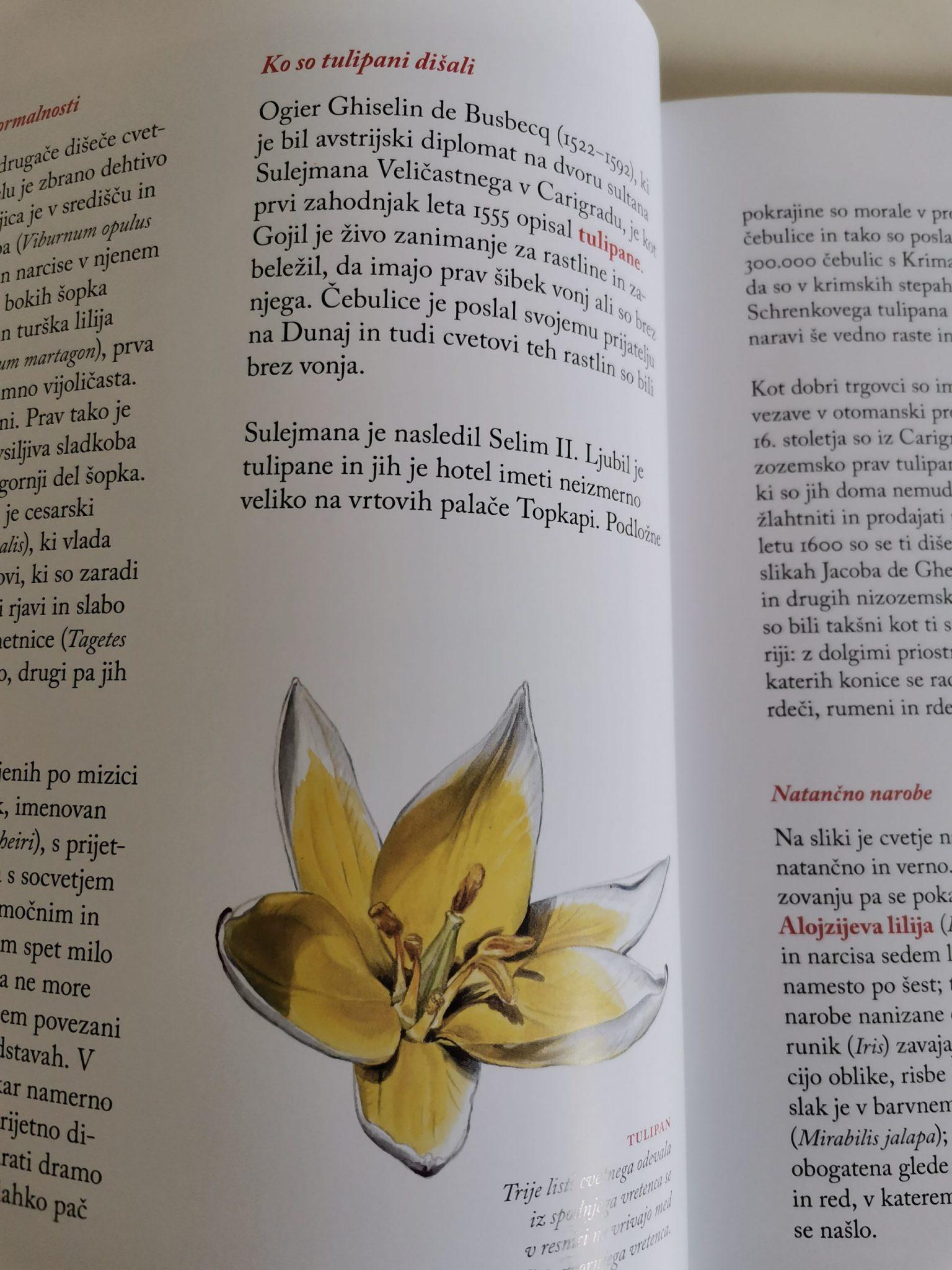 Cvetje in ženske