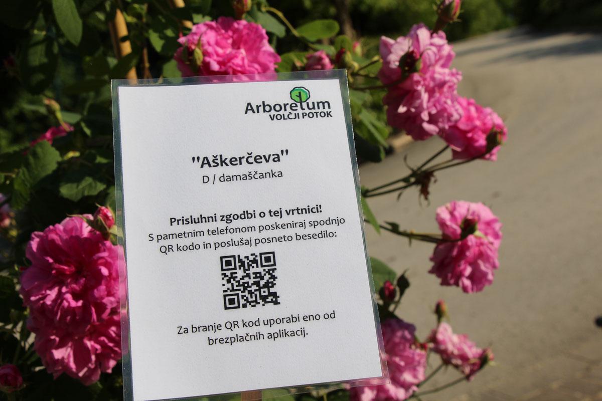 Primer pametnega avdio vodiča pri vrtnici