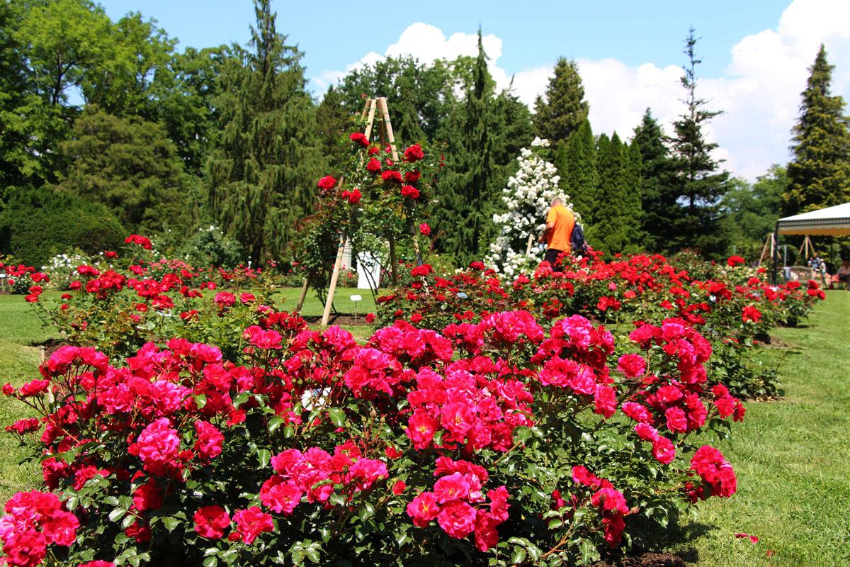 Teden vrtnic