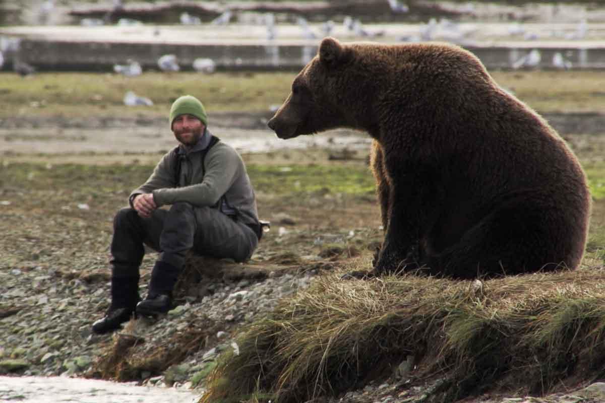 Medved v meni
