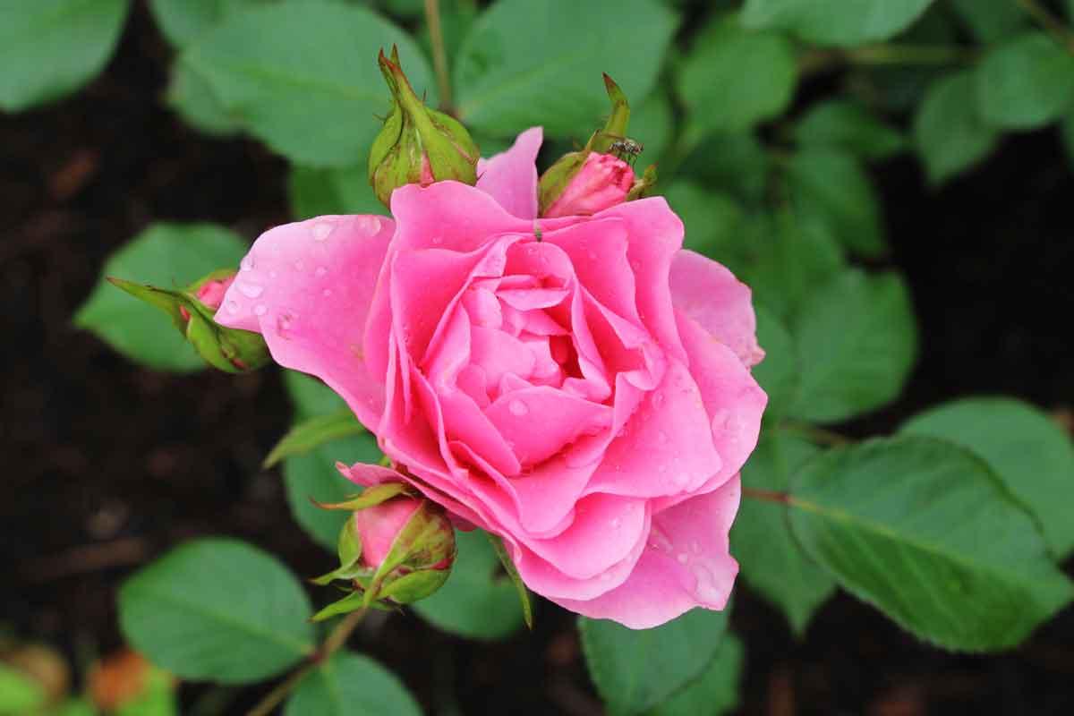 Vrtnica I'm grateful